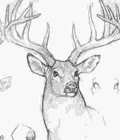how to draw a deer head deer sketch drawing at getdrawingscom free for personal
