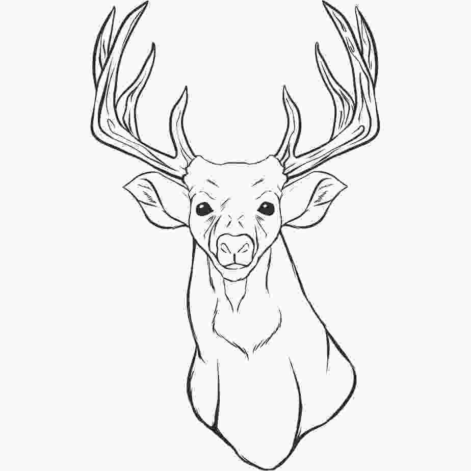 how to draw a deer head free printable deer coloring pages for kids