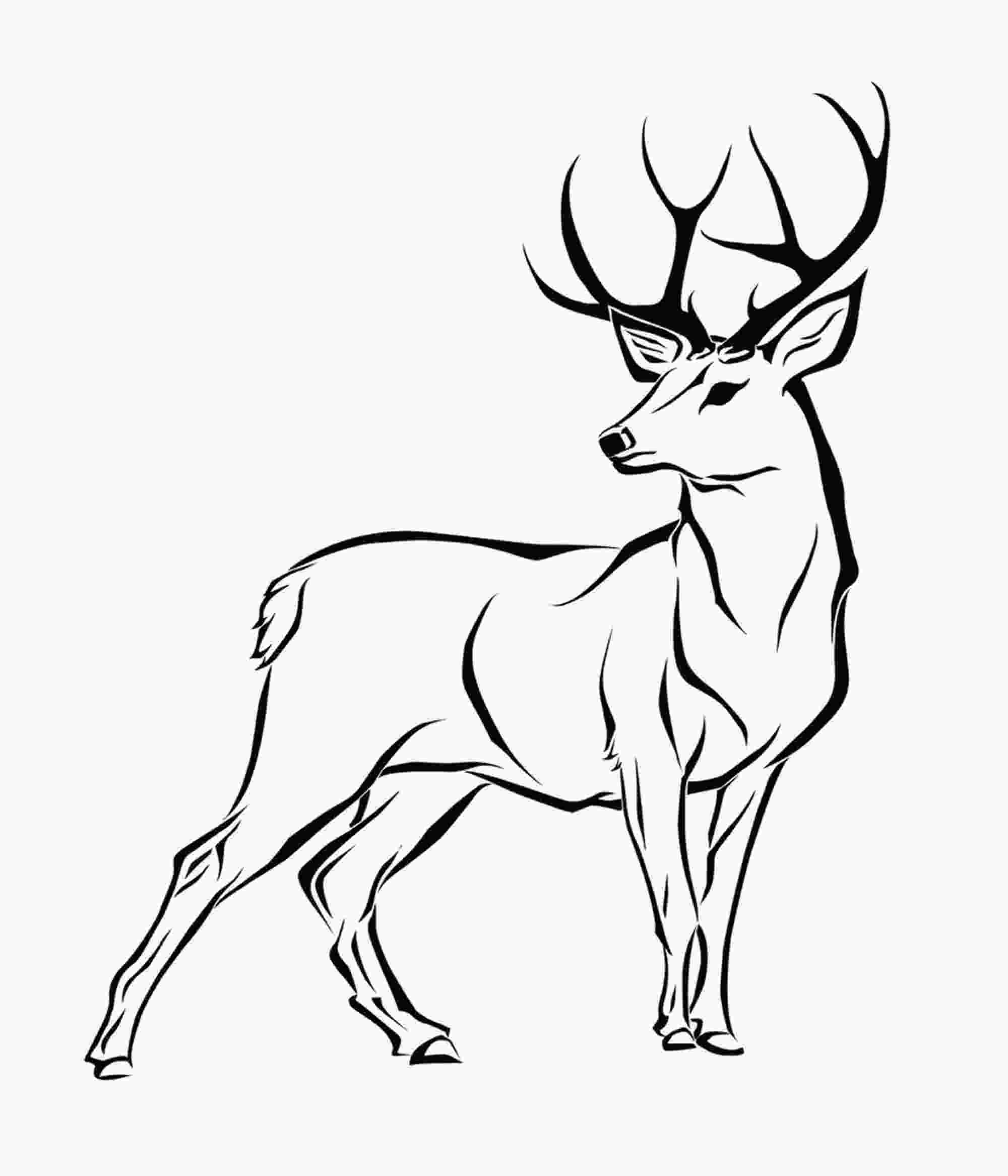 how to draw a deer head how to draw a deer kids coloring simple lines