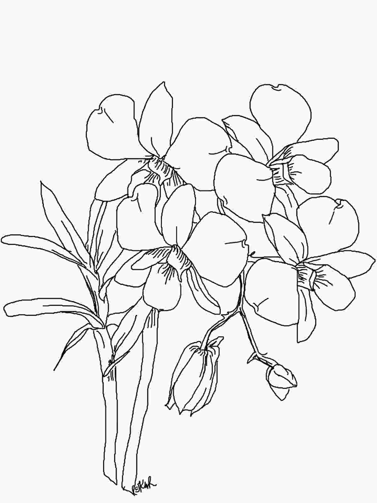 how to draw orchid flower the kitchen table crafter free digi sketch phalaenopsis