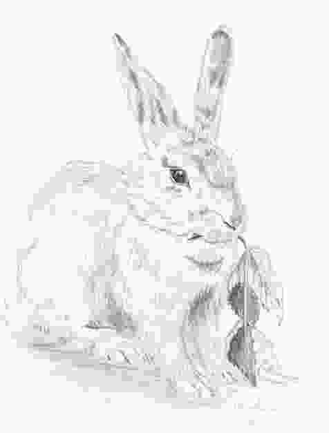 how to draw realistic rabbit how to draw a bunny step by step arcmelcom