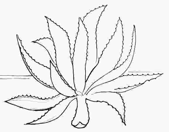 plant drawing tutorial how to draw an agave tutorial