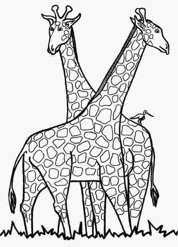 printable coloring page 9 giraffe coloring pages free psd pdf jpg format