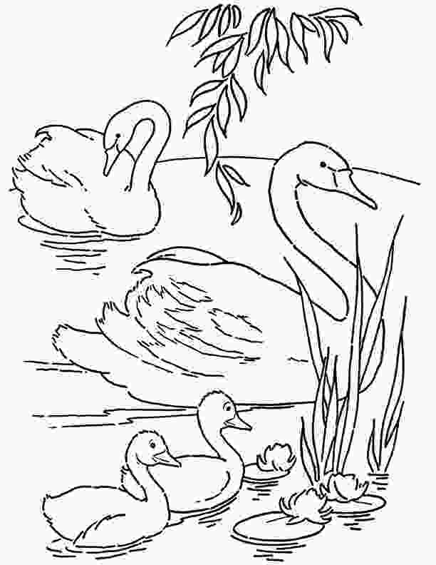 printable coloring page free printable swans coloring page the graphics fairy
