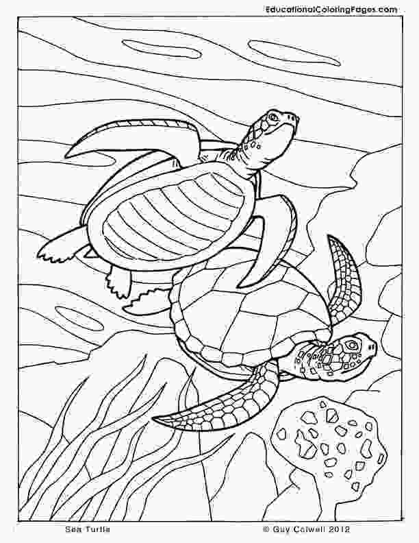 sea coloring book sea and seashore book two 171 animal coloring pages for kids