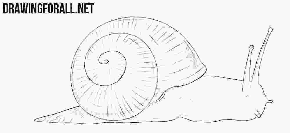 snail drawings how to draw a snail drawingforallnet