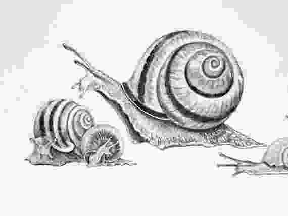 snail drawings original drawing of snails whimsical snail illustration