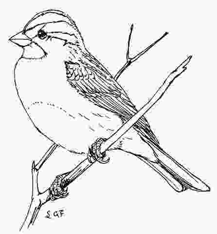 sparrow coloring page 17 best hd quilt images on pinterest clipart black and