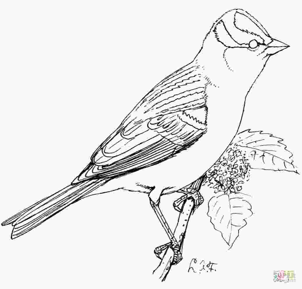 sparrow coloring page perched white crowned sparrow coloring page free