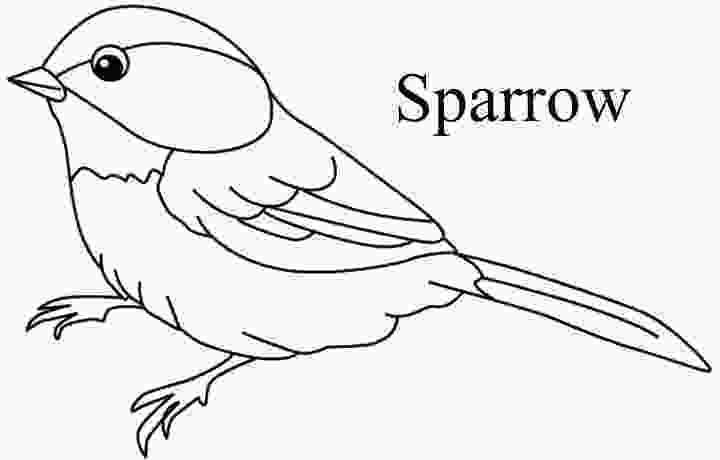sparrow coloring page sparrow coloring download sparrow coloring for free 2019