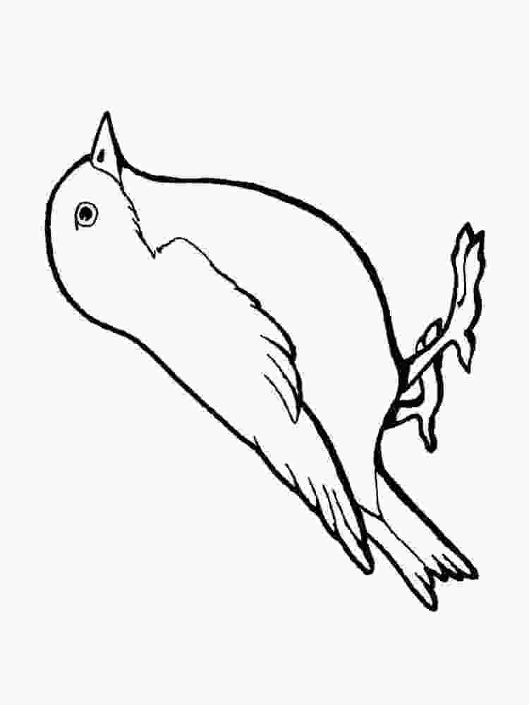 sparrow coloring page sparrow coloring pages download and print sparrow 2