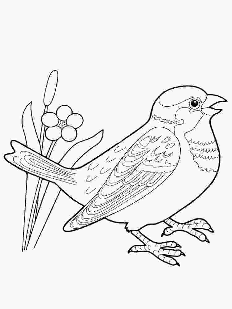 sparrow coloring page sparrow coloring pages download and print sparrow