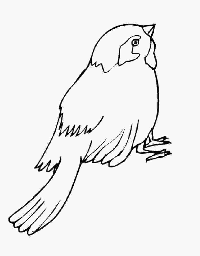 sparrow coloring page sparrow coloring pages to download and print for free 1