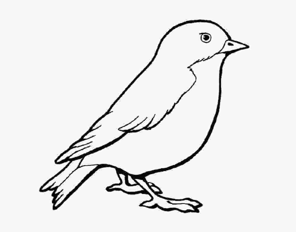 sparrow coloring page sparrow coloring pages to download and print for free