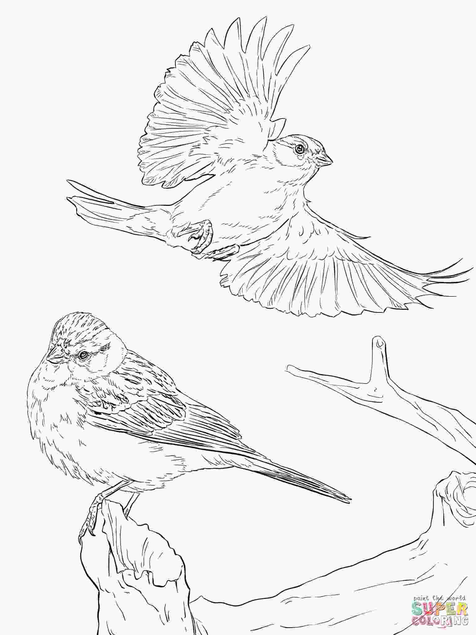 sparrow coloring page two chipping sparrows coloring page free printable