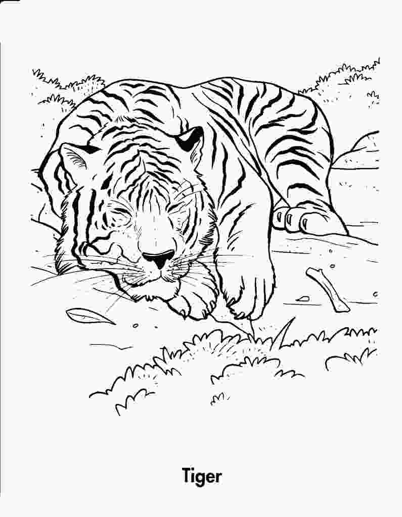 tiger printable free printable tiger coloring pages for kids