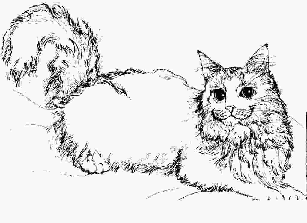 warrior cat coloring free printable cat coloring pages for kids