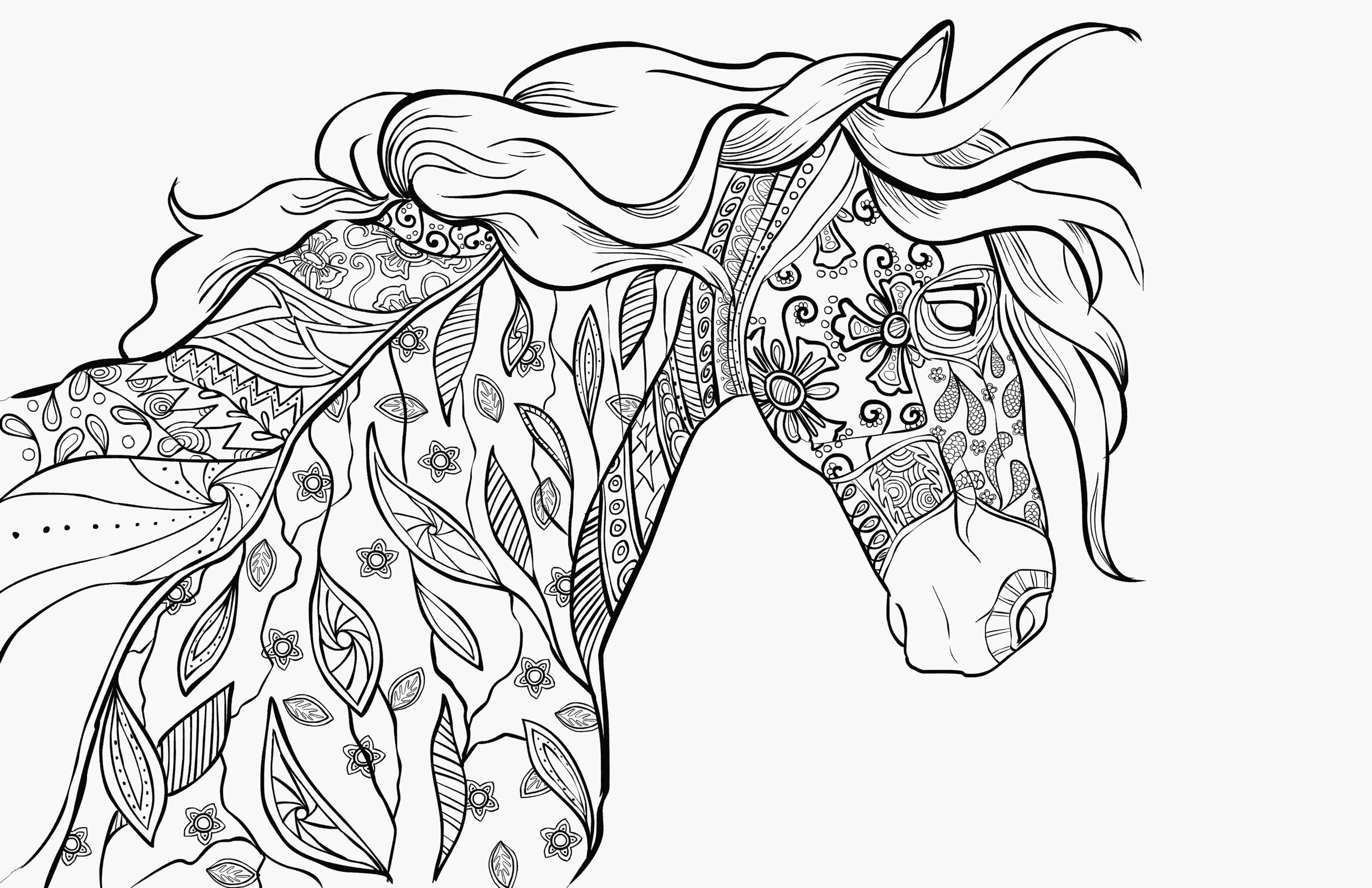 coloring pictures horses adult coloring book page coloring for grownups selah