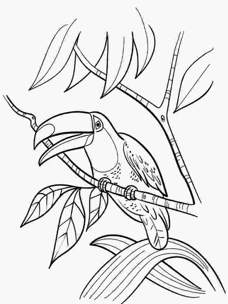 coloring sheets toucan coloring pages to download and print for free