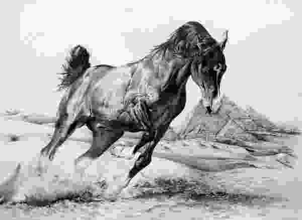 horse drawing 10 cool horse drawings for inspiration hative
