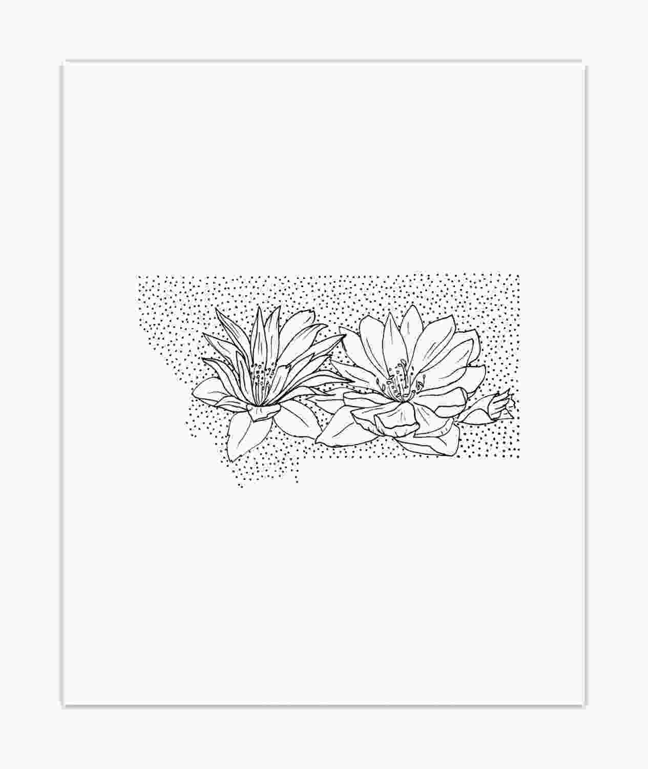 illinois state flower montana bitterroot state flower drawing giclee