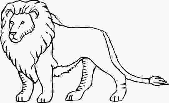 pictures of lions to color cartoon lion coloring pages coloring pages
