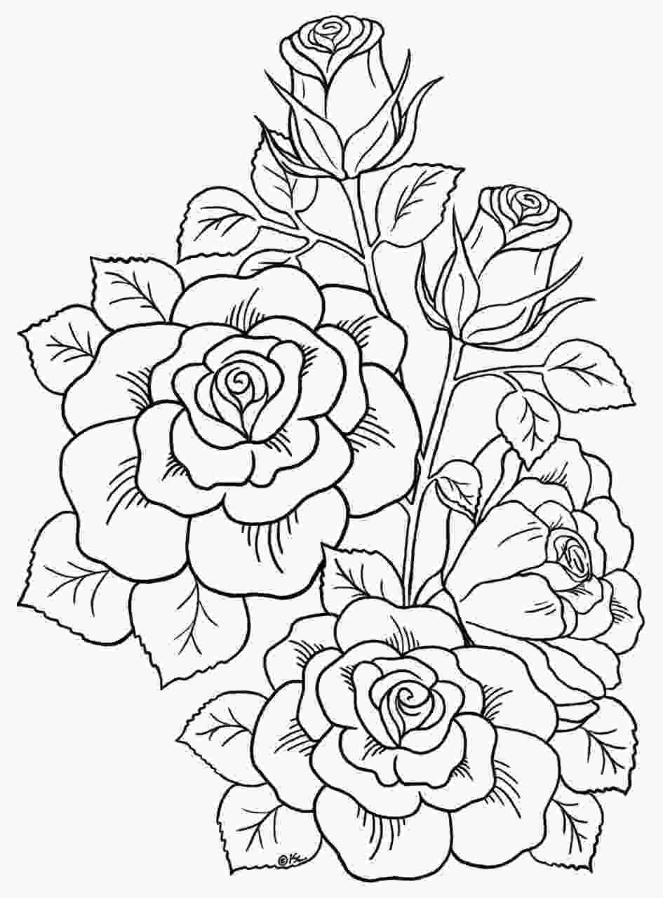 rose colouring pin by carole driessen on adult coloring in pictures to
