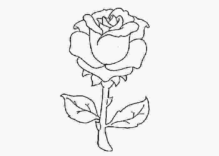 rose colouring red rose coloring page