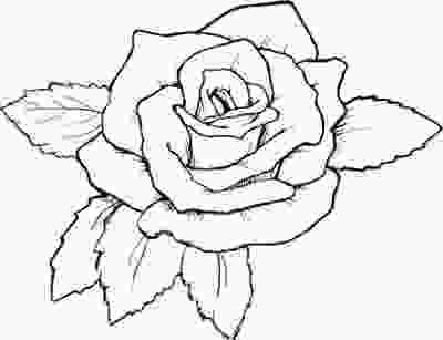 rose colouring rose coloring pages free posted by damry on wednesday