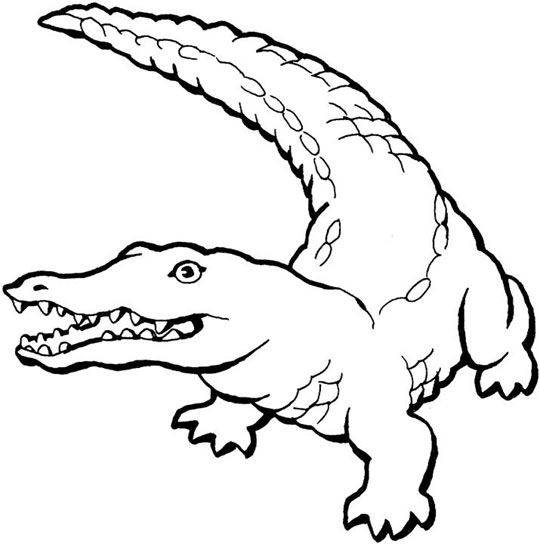 alligator coloring page free printable alligator coloring pages for kids cool2bkids alligator coloring page