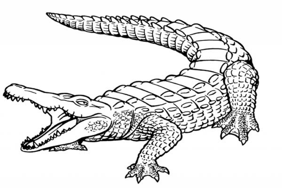 alligator coloring page free printable alligator coloring pages for kids cool2bkids coloring alligator page