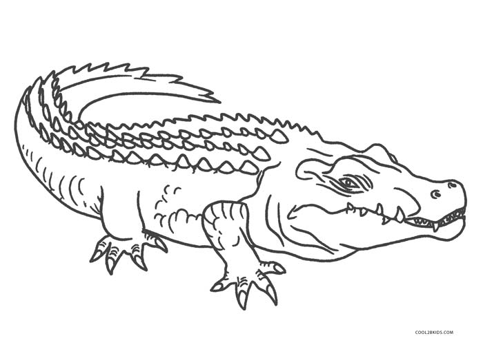 alligator coloring page free printable alligator coloring pages for kids cool2bkids coloring alligator page 1 1