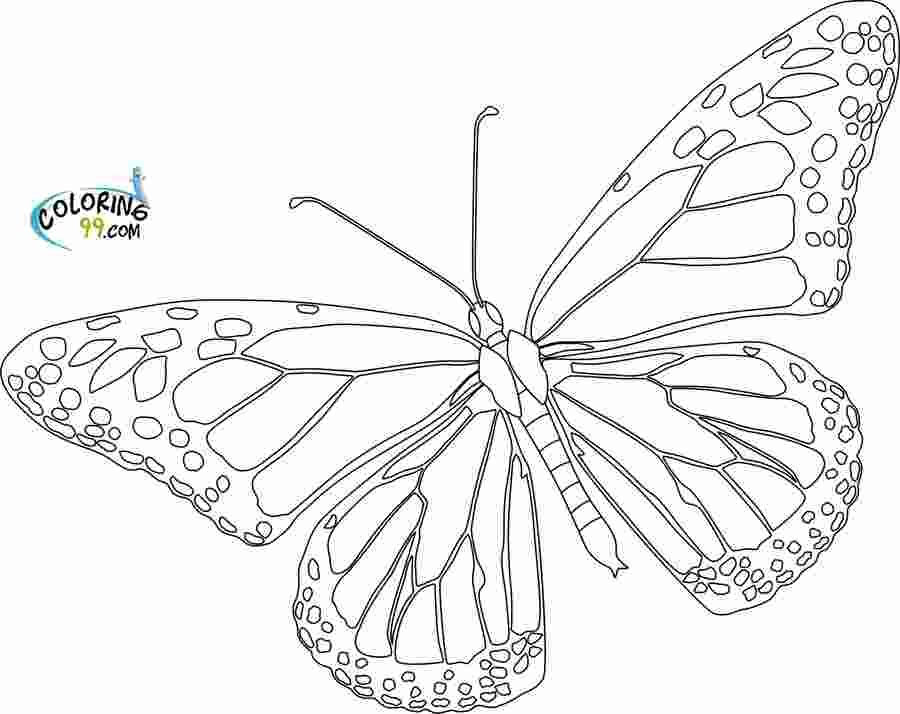butterfly coloring sheet printable butterfly coloring pages team colors