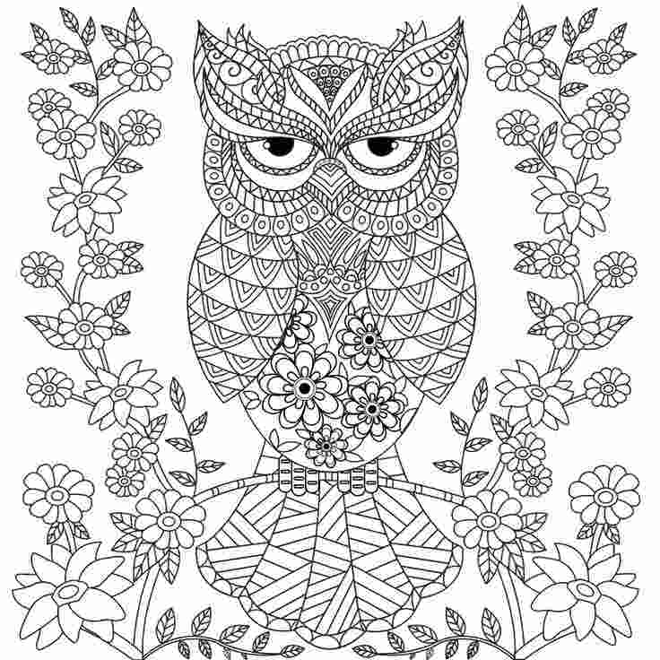 coloring owl colour owl coloring pages for adults free detailed owl coloring