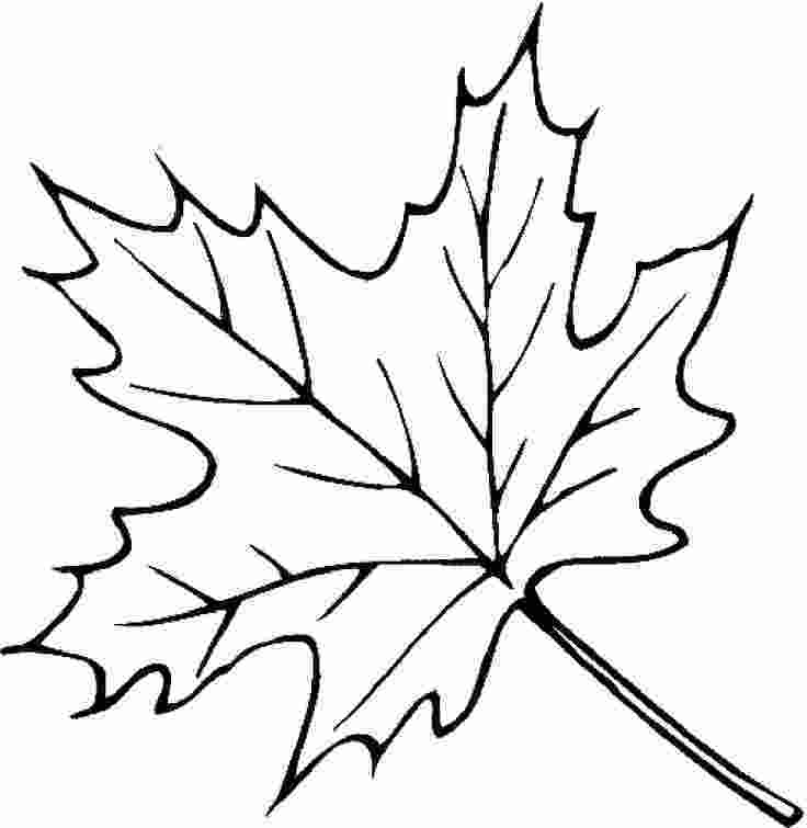 coloring pages leaves 20 best leaves coloring pages images on pinterest kids