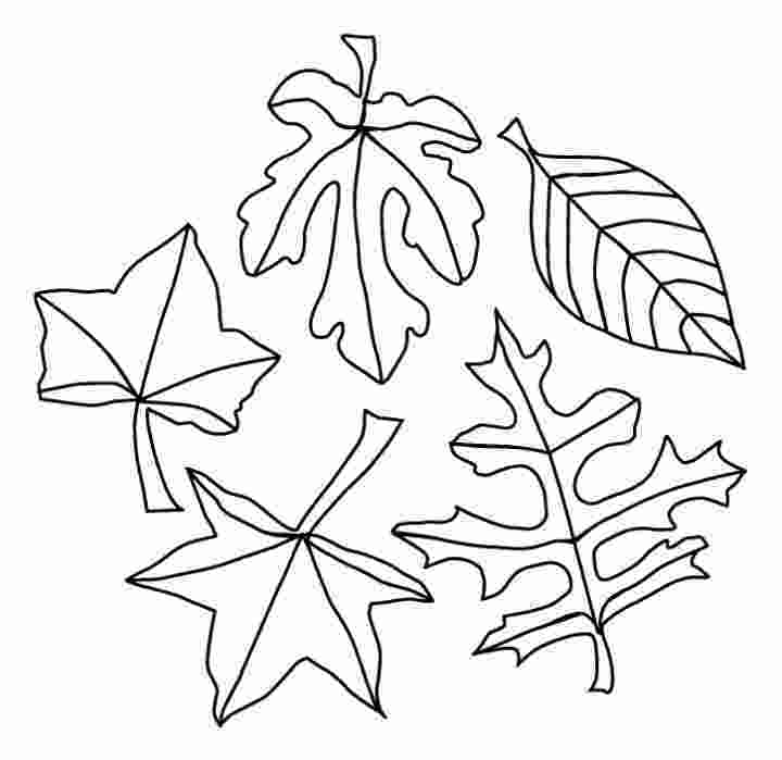 coloring pages leaves fall leaves coloring pages best coloring pages for kids