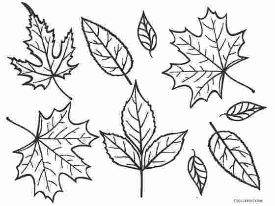 coloring pages leaves free printable leaf coloring pages for kids cool2bkids