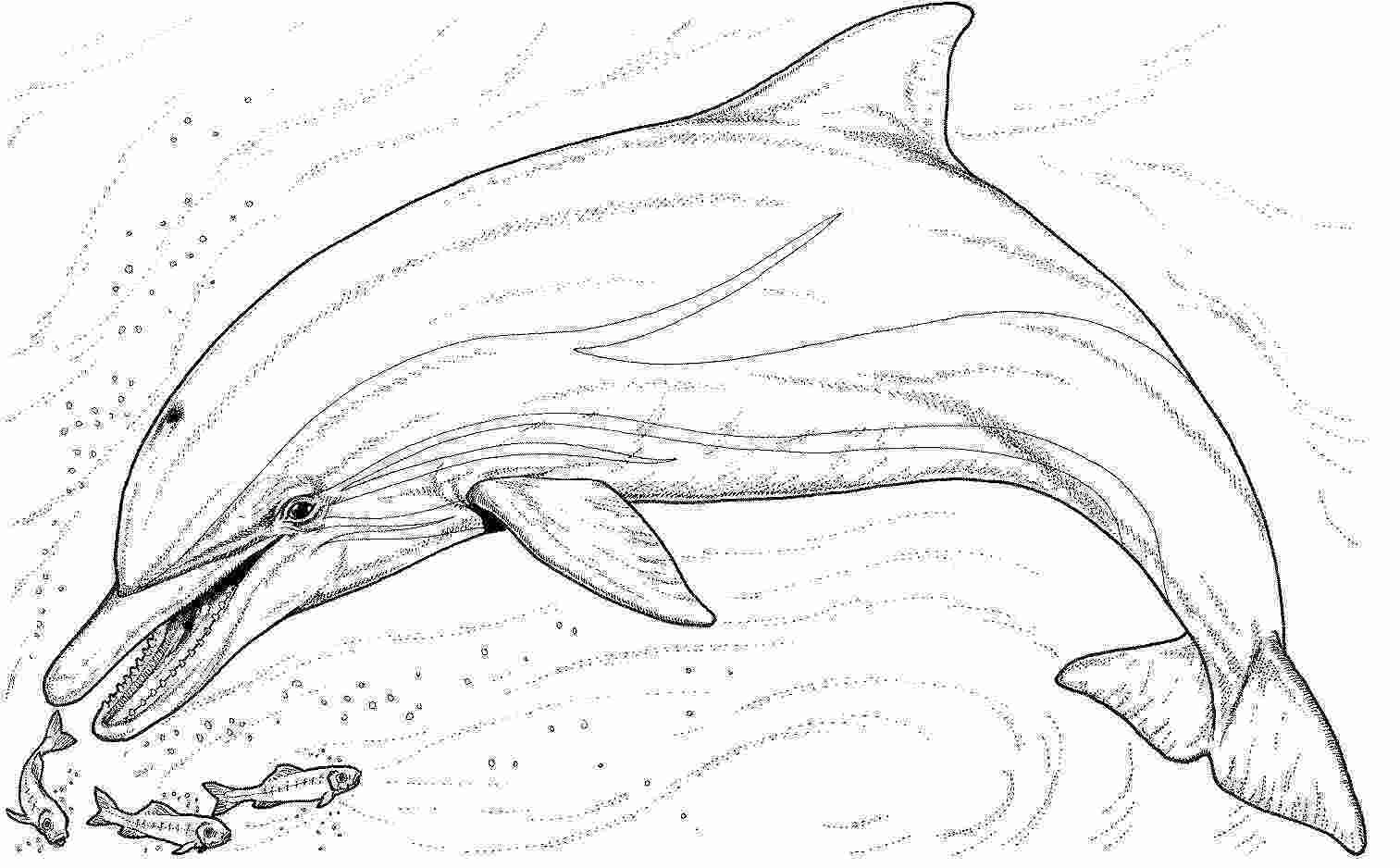 dolphin colouring in pictures free printable pictures of dolphins download free clip
