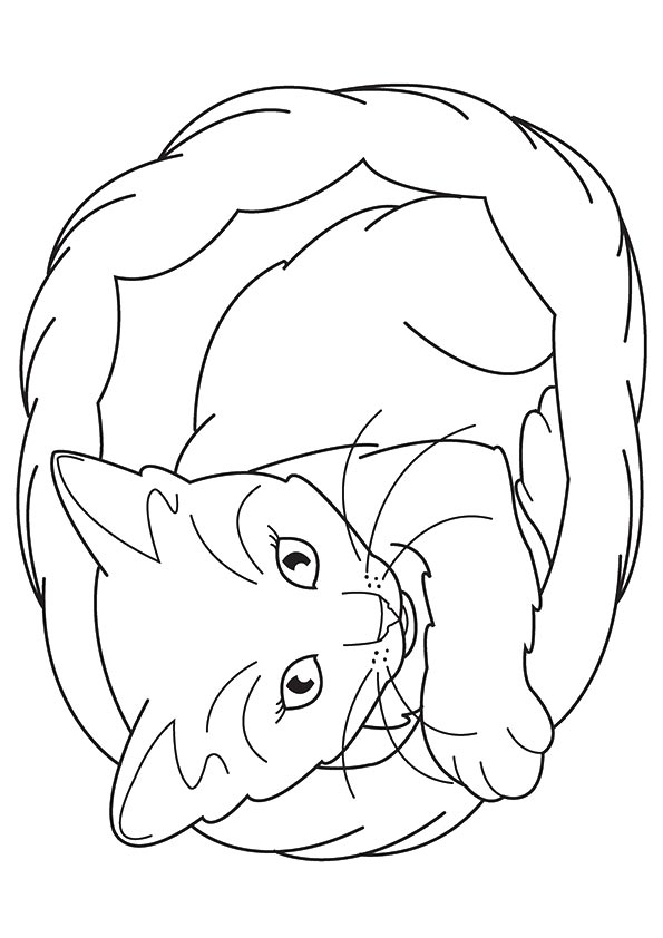 free coloring pages of kittens meowing kitten coloring page free printable coloring pages coloring free of pages kittens