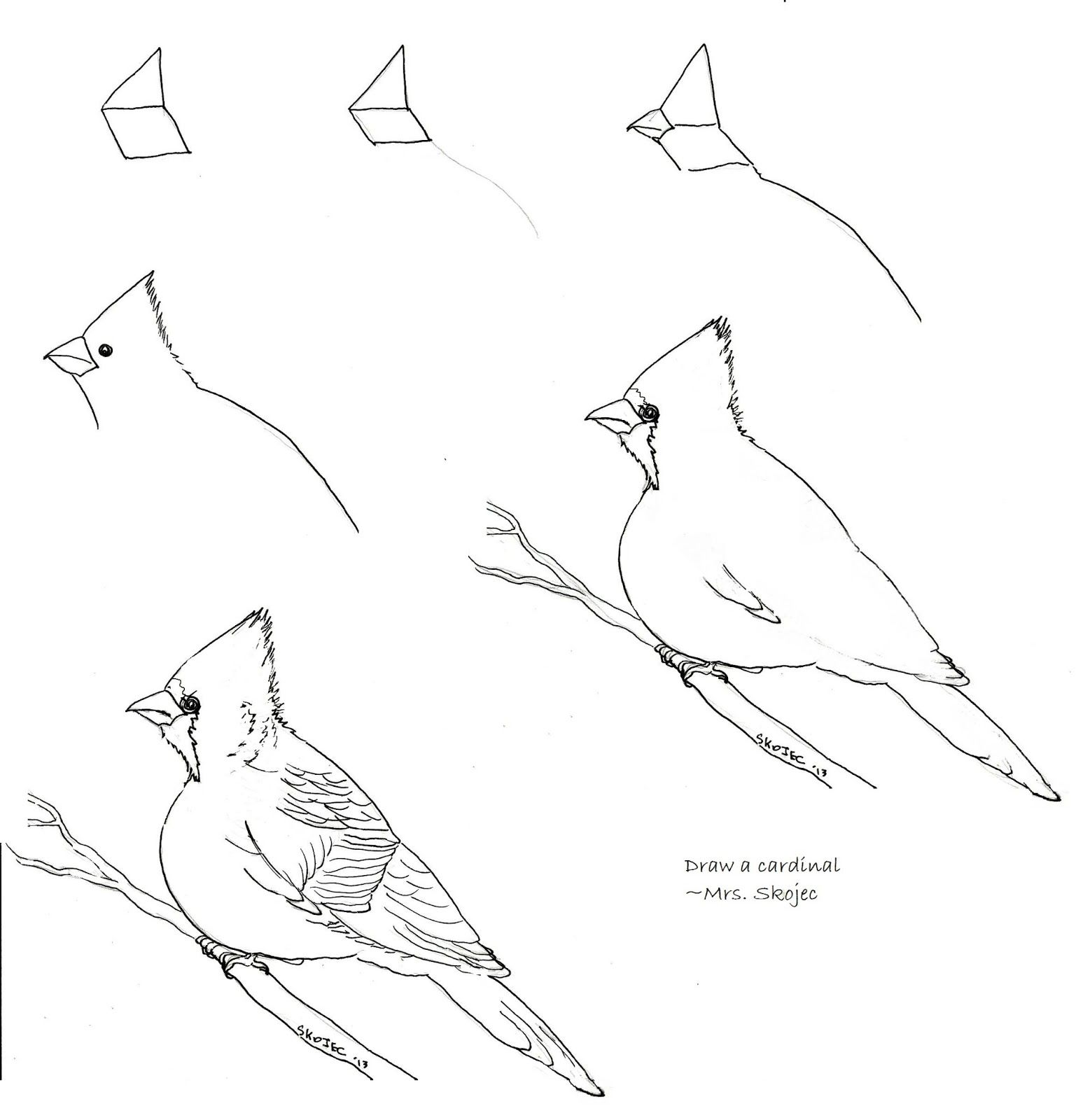 how to draw a california quail step by step 33 best images about bird art on pinterest watercolors a california quail to how by step draw step