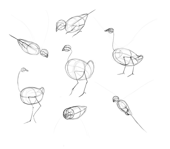 how to draw a california quail step by step how to draw a california quail step by step drawing by california to how quail draw step step a