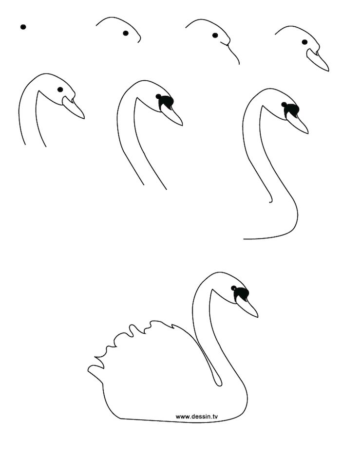 how to draw a california quail step by step how to draw a pigeon step by step birds animals free to by step how quail step draw a california