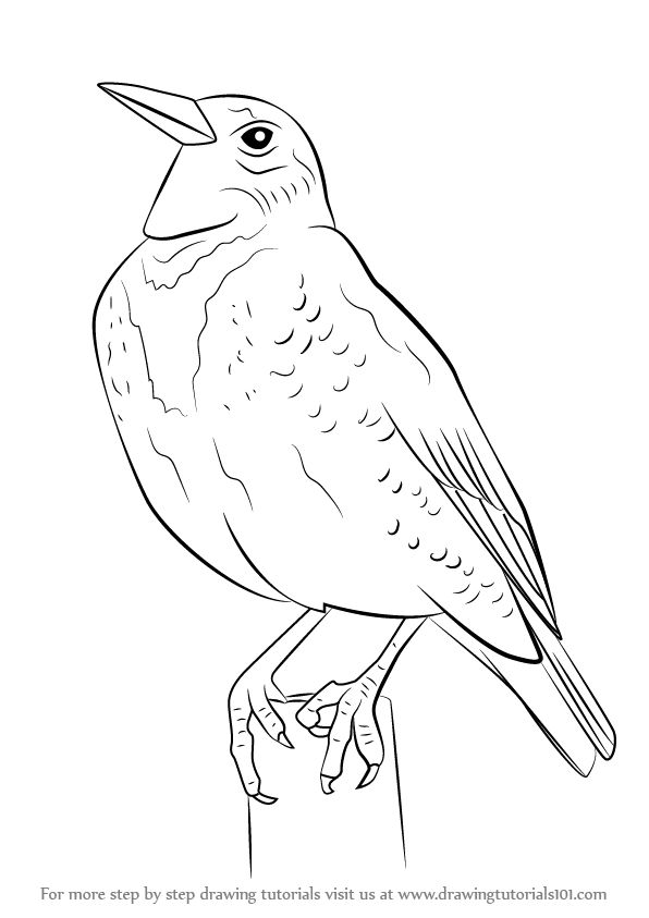 how to draw a california quail step by step learn how to draw a western meadowlark birds step by quail california to draw how a step by step