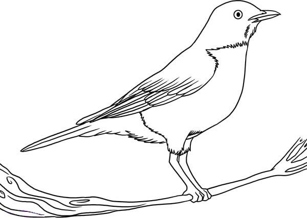 how to draw a california quail step by step pin by rx4 art spa on cute in 2018 pinterest dessin draw step by step a quail to california how