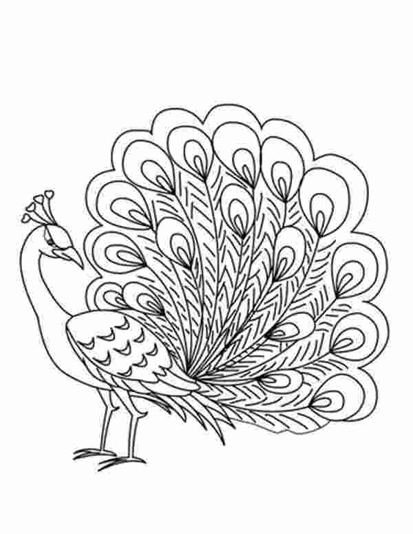 peacock coloring page peacock drawing at getdrawingscom free for personal use