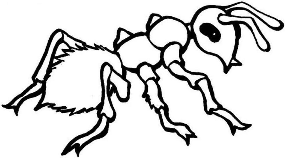 ants coloring pages free printable ant coloring pages for kids coloring ants pages