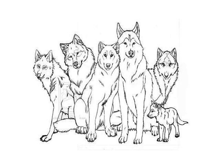 coloring pages of wolves wolf coloring pages wildwolfkids wolves of coloring pages