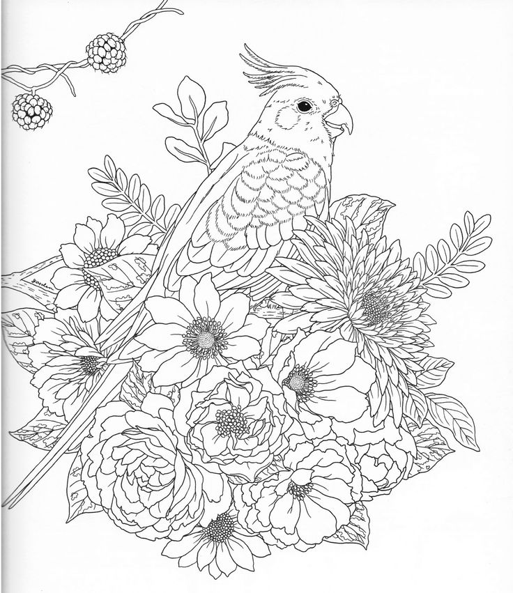 coloring stencils for adults harmony of nature adult coloring book pg 39 color pages stencils for adults coloring