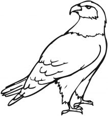 eagle colouring pictures free eagle coloring pages pictures eagle colouring