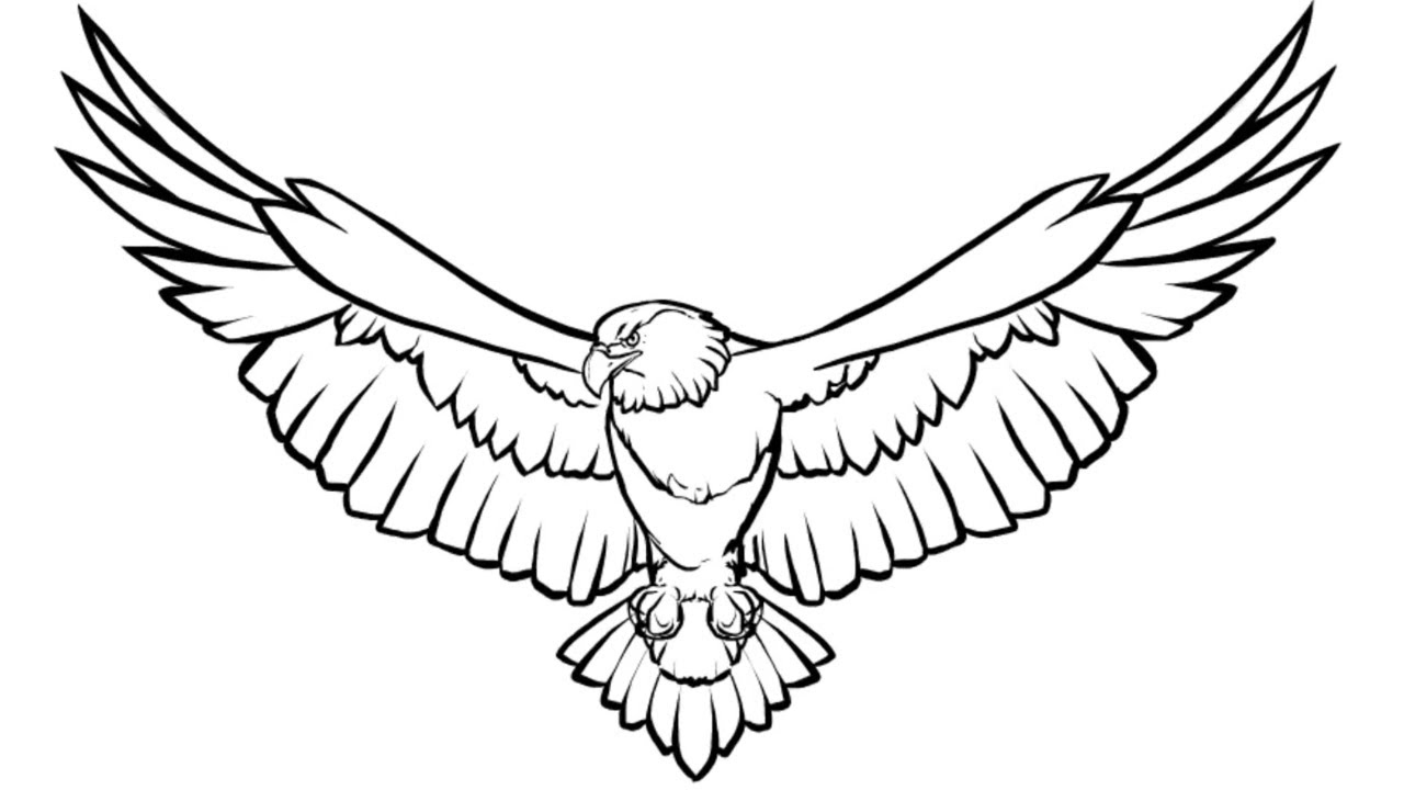 eagle colouring pictures high quality birds coloring page with an eagle to print colouring pictures eagle